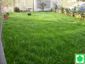 Trasporto scavo terra da giardino - Erba nana per giardino ...
