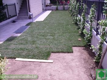 Posa o semina tappeto erboso for Tappeto erboso a rotoli