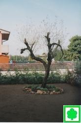 Realizzazione di giardini e parchi for Giardinieri verona